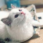 Mimi The Kitty