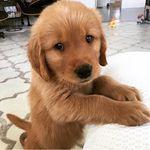 @Puppy