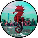 Seahorse Fan Club