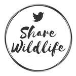 Best WILDLIFE Photos & Videos