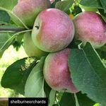 Shelburne Farmers' Market VT