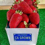 Sunshines Strawberry Farm
