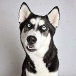 Awesome Dogs Pics/Vids