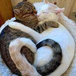 Super Lovely Cat 😍