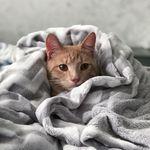 Comfy Cat 😻