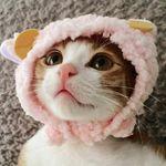 Sweet Cat Club