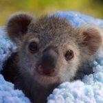 Baby Animals / Pets