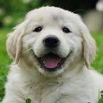 Best Of Puppies