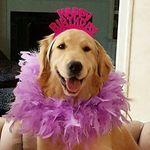 The Birthday Puppy