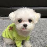 Cute Little Puppies 🐶