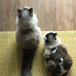 Murphy & Olive McFluff