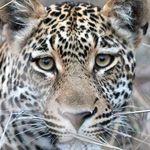 UliHB | Wildlife