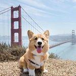 Cutest Pet Posts 🐶 🐱
