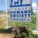 Vieques Humane Society