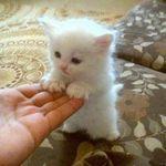 Pet Stories Videos Pics 💎
