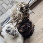 Yoshi & Gustav