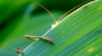Insekten als Nahrungsmittel?