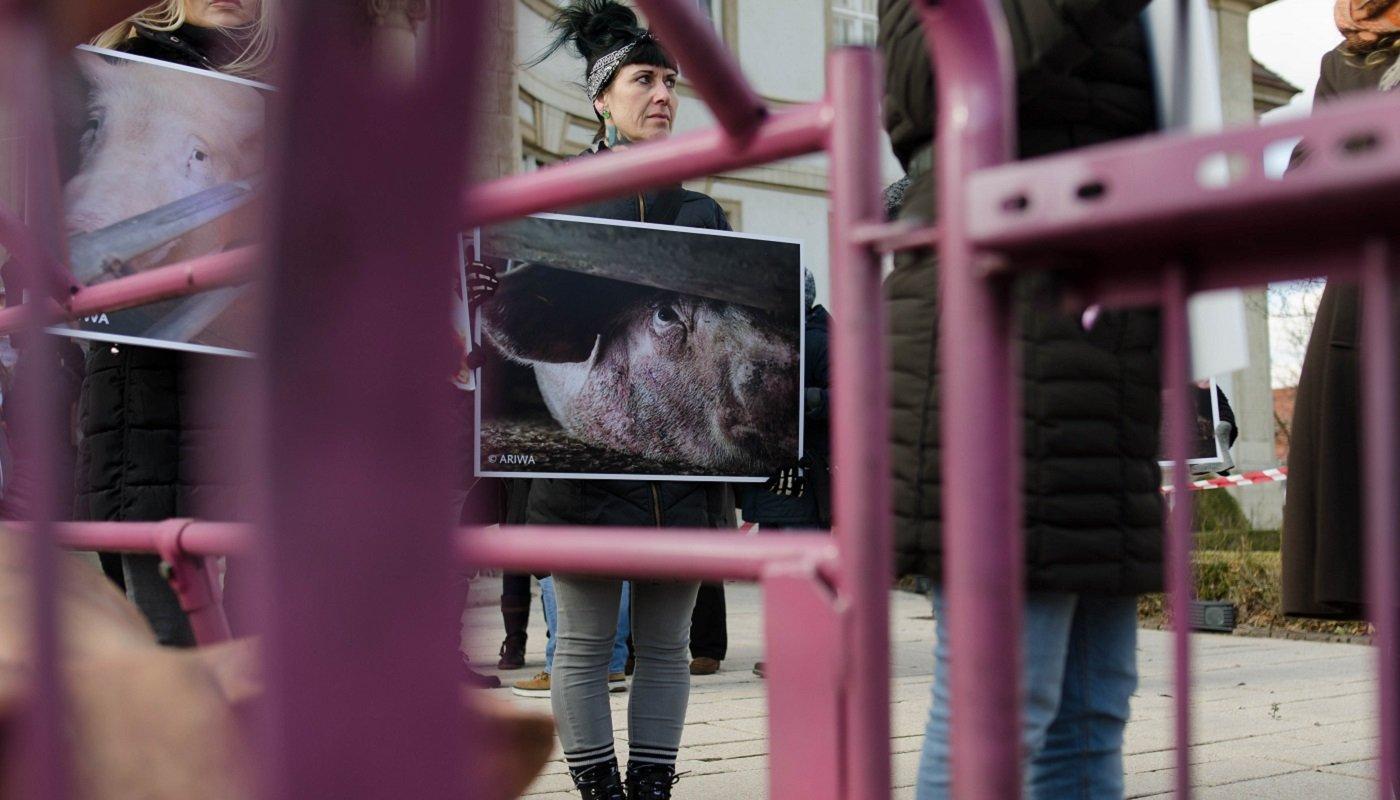Aktivistin mit einem Foto von einem gequälten Schwein.