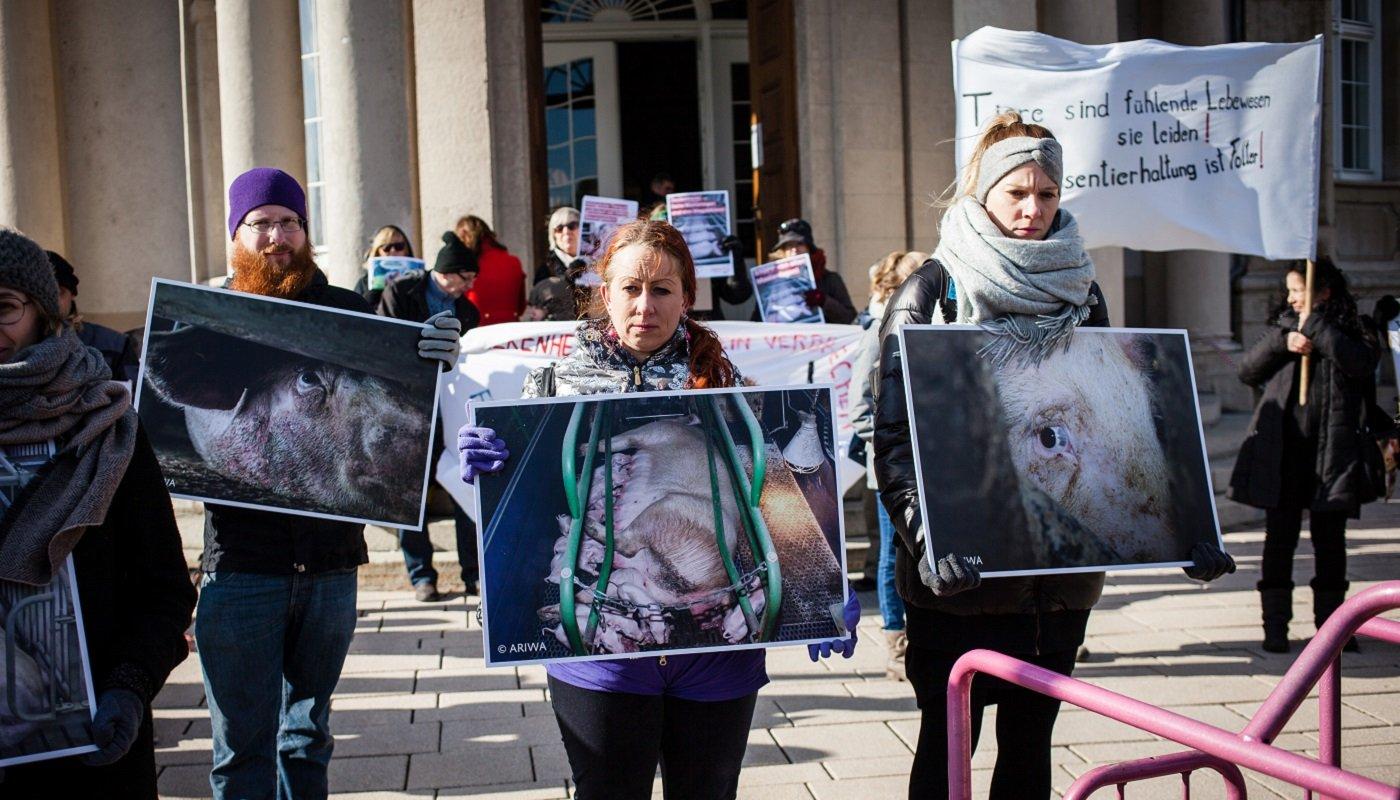 AktivistInnen mit Fotos von einer Muttersau in einer Abferkelbox.