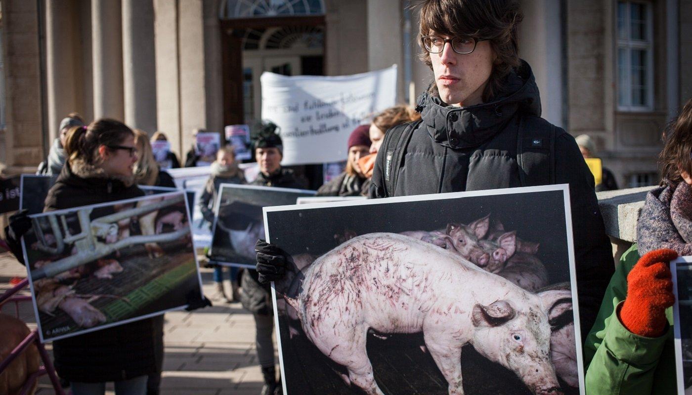 Die UnterstützerInnen zeigen Fotos, die die angeklagten TierschützerInnen in einer Schweinemastanlage gemacht haben.