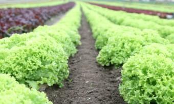 Vegane Landwirtschaft als Standard anerkannt