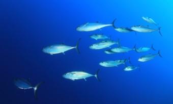 Fische (wild)