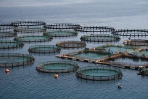 Aquakultur im offenen Meer
