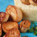 »Jakobsmuscheln« auf Kartoffel-Meerrettich-Püree
