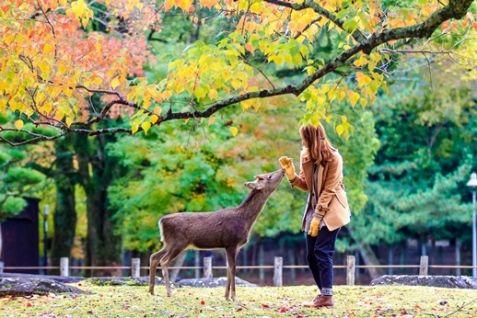Nara from Kyoto