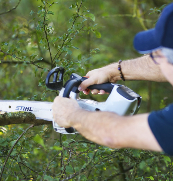 élagage arbres Vendée