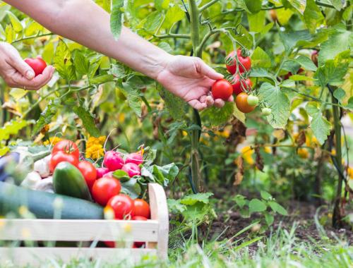 entretien jardin Vendée Rives de l'Yon