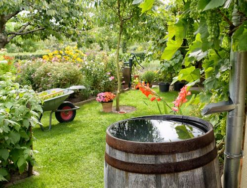 On la déteste mais le jardin l'adore : c'est la pluie