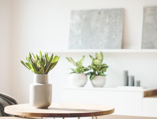 Côté maison | La Serre Tixier, Jardinerie Horticulture