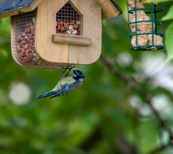 Oiseaux | La Serre Tixier, Jardinerie Horticulture
