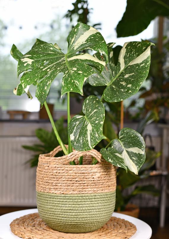 Plantes exotiques | La Serre Tixier, Jardinerie Horticulture
