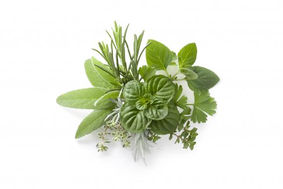 Aromatiques et Plants de potager | La Serre Tixier, Jardinerie Horticulture