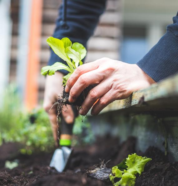 Outils et accessoires | La Serre Tixier, Jardinerie Horticulture