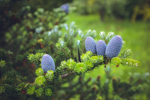 Arbres, Arbustes et Rosiers | La Serre Tixier, Jardinerie Horticulture
