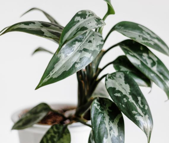 Plantes dépolluantes | La Serre Tixier, Jardinerie Horticulture