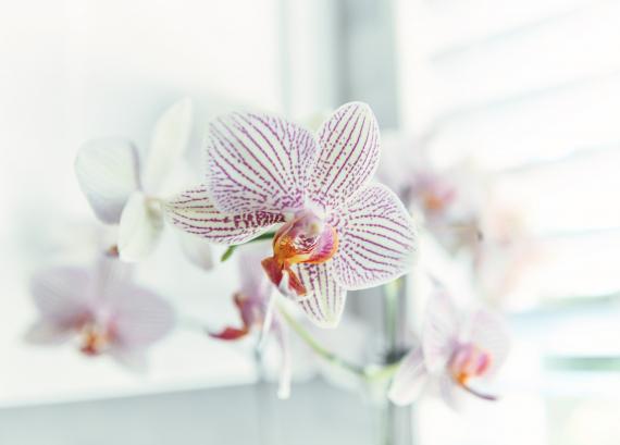 Plantes fleuries | La Serre Tixier, Jardinerie Horticulture