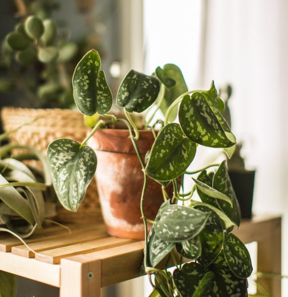 Plantes vertes | La Serre Tixier, Jardinerie Horticulture
