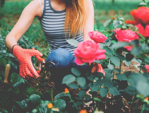 Côté jardin | La Serre Tixier, Jardinerie Horticulture