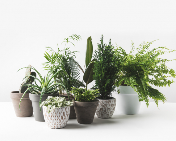 Décoration et Contenants | La Serre Tixier, Jardinerie Horticulture