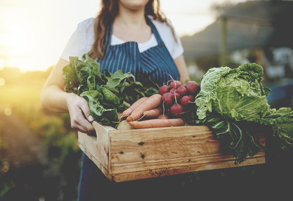 Aromatiques et plants de potager