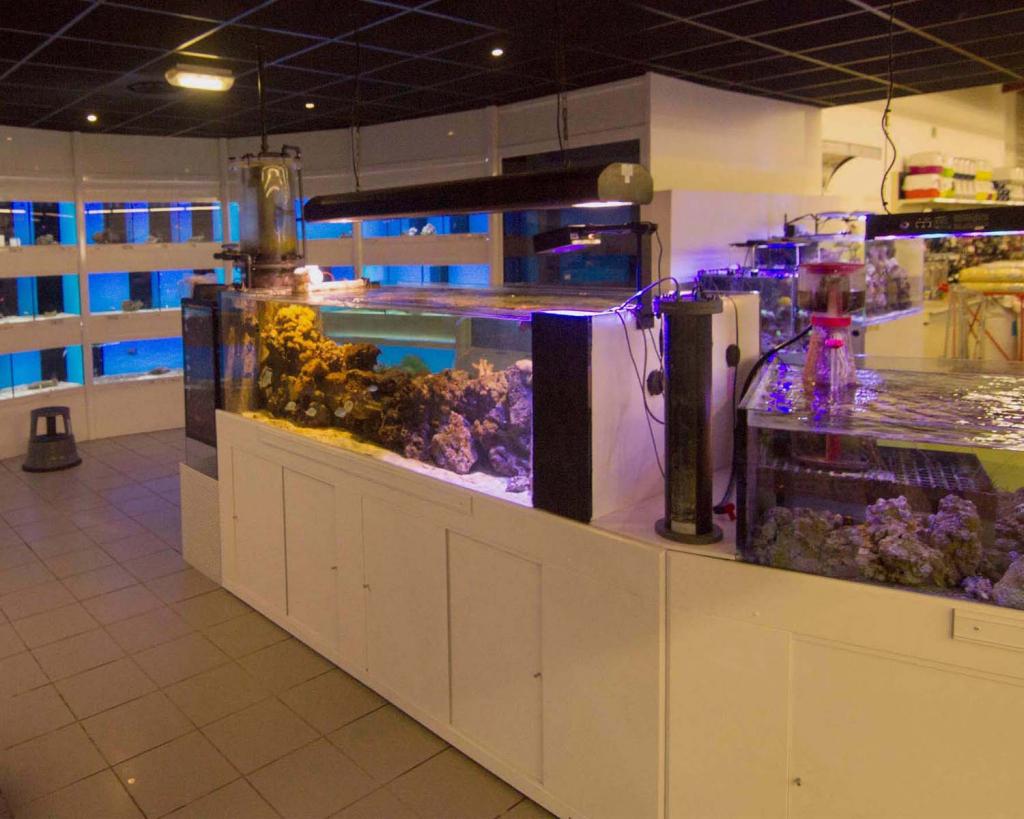 Philanima aquariums marins