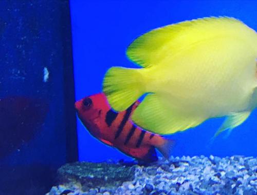 Philanima, petite merveille aquatique, poisson