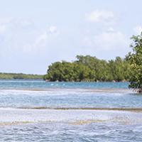 INTERVIEW - En osmose avec l'écosystème marin.