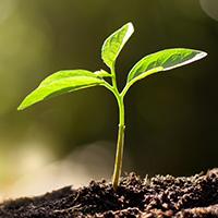 INTERVIEW - Biomimétisme : quand la Nature inspire la transition énergétique