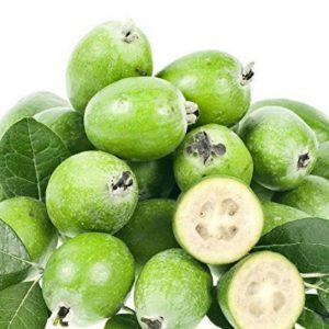 Pineapple Guava Plant