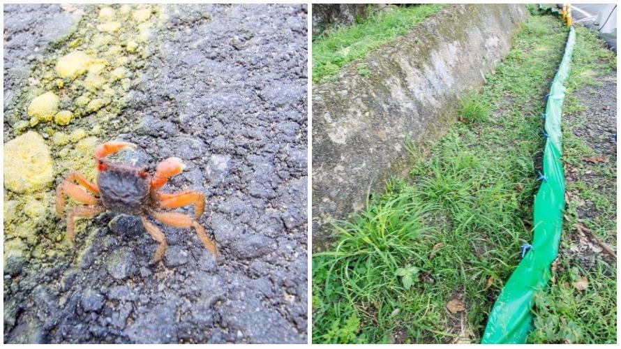 可愛的小陸蟹與護蟹步道